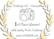 wild-winner-1st-12