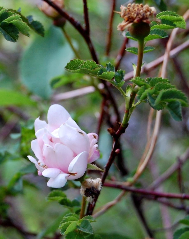 Vår och försommar i trädgården och inne 2011 075