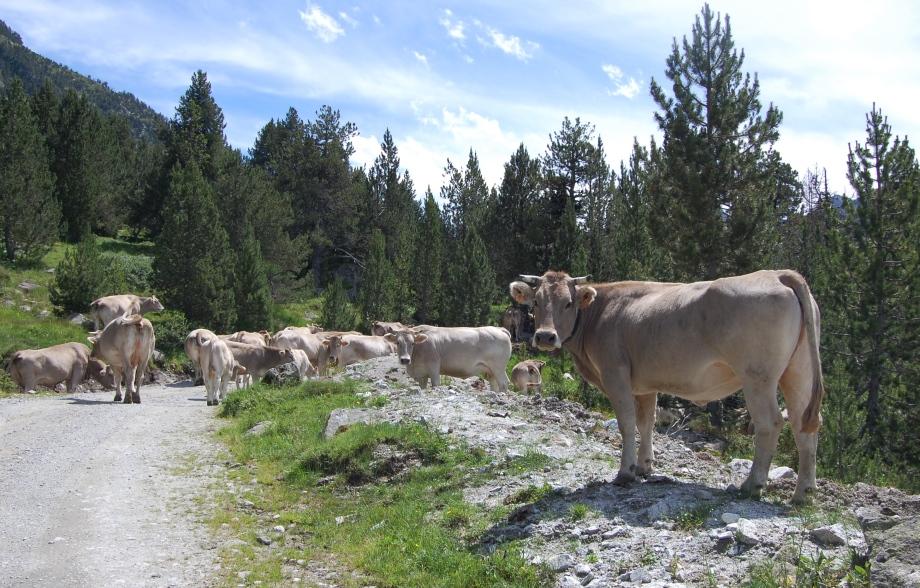 Pyrenéerna 2011 197