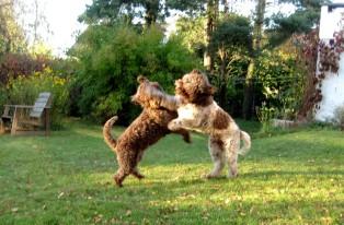 Höst och hundar
