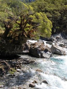 Nya Zeeland 2 493