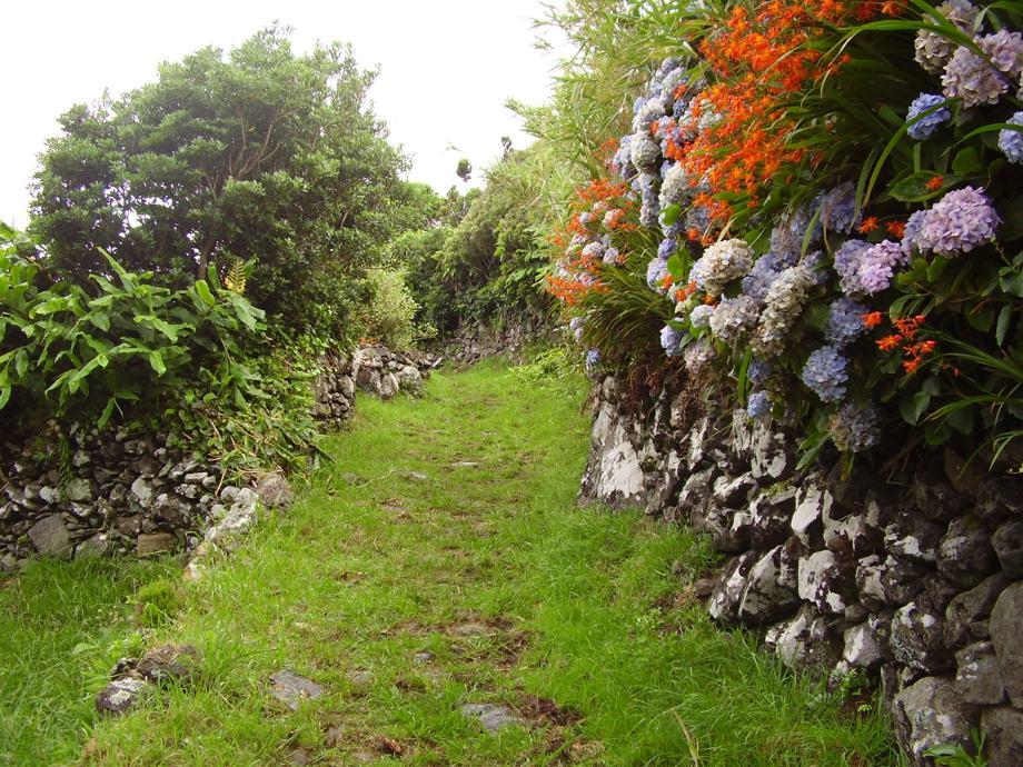 Vandring med hortensia och montbresia som sällskap