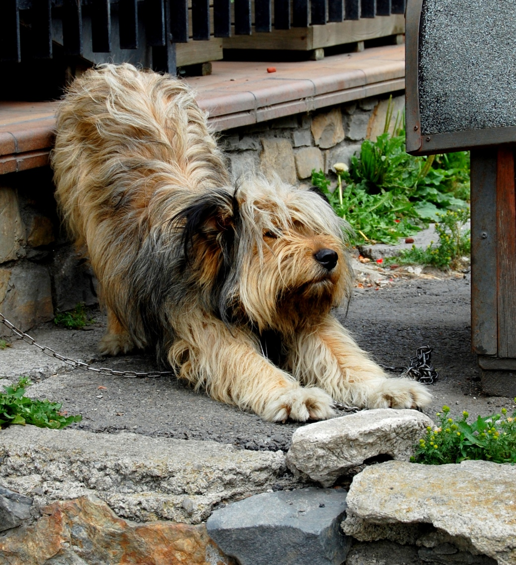 This lovely dog was chained to his