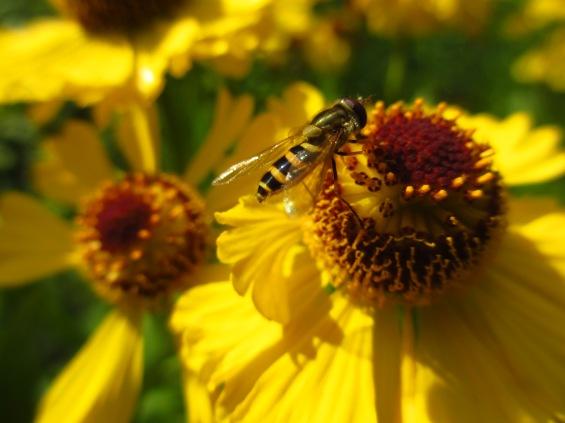 Trädgården hösten 2012 034