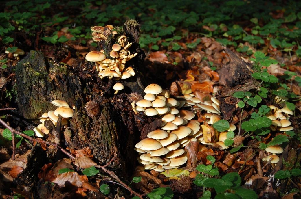 Emmas resa och en dag i svampskogen 2011 061