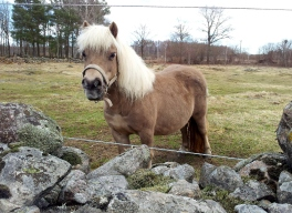 And the little friendly pony looked up at me...well, now I'm here - have you got something for me?