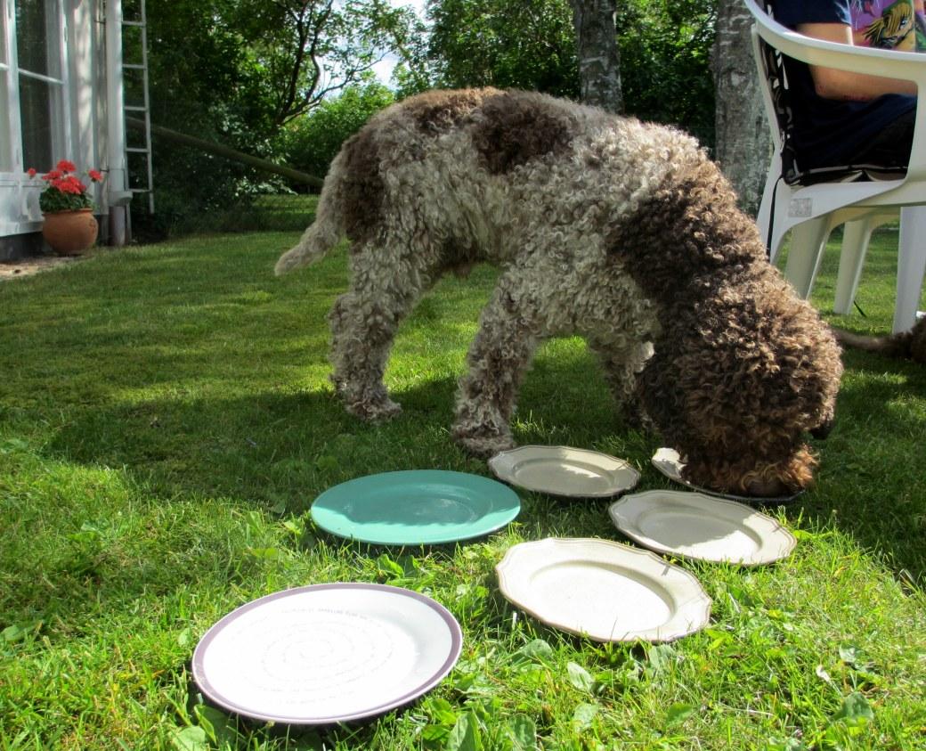 Hundar och pelargoner i juni 2012 003
