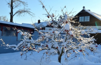 Across the street - winter certainly came unexpected...