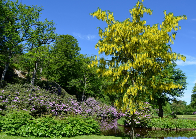 The Rhododendron Garden