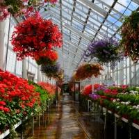 Aberdeen - Duthie Park and the David Welch Winter Gardens