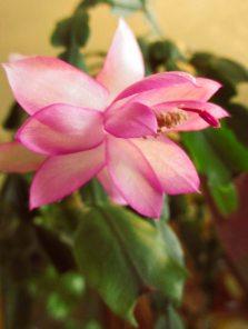 Closer pink...