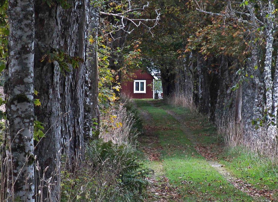 Skogen och 365 foton 042_copy
