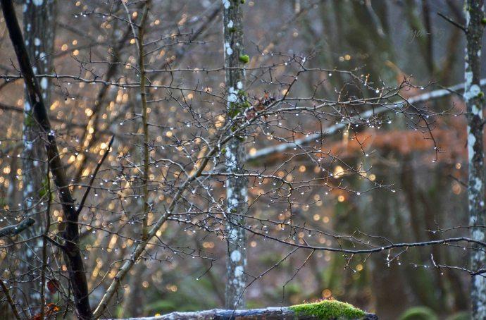 Vintervandring december 067_copy