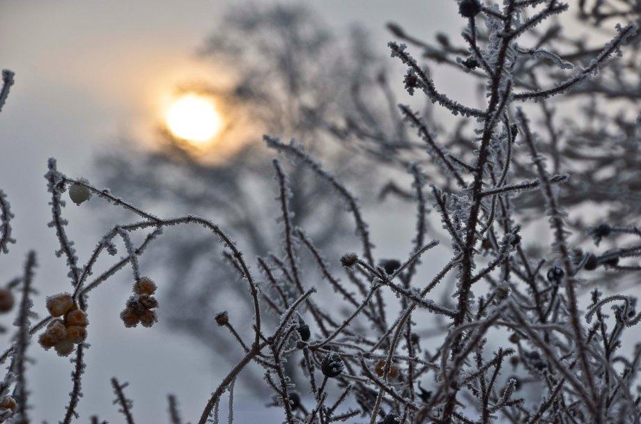Blandat och fototisdag Värsjön och Hovdala 073_copy