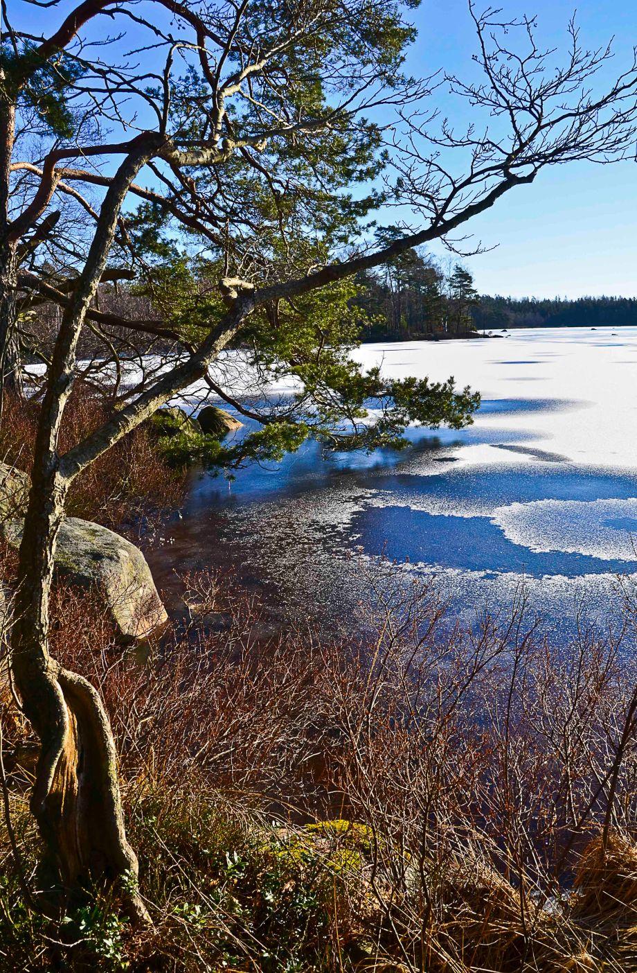 Blandat och fototisdag Värsjön och Hovdala 311_copy
