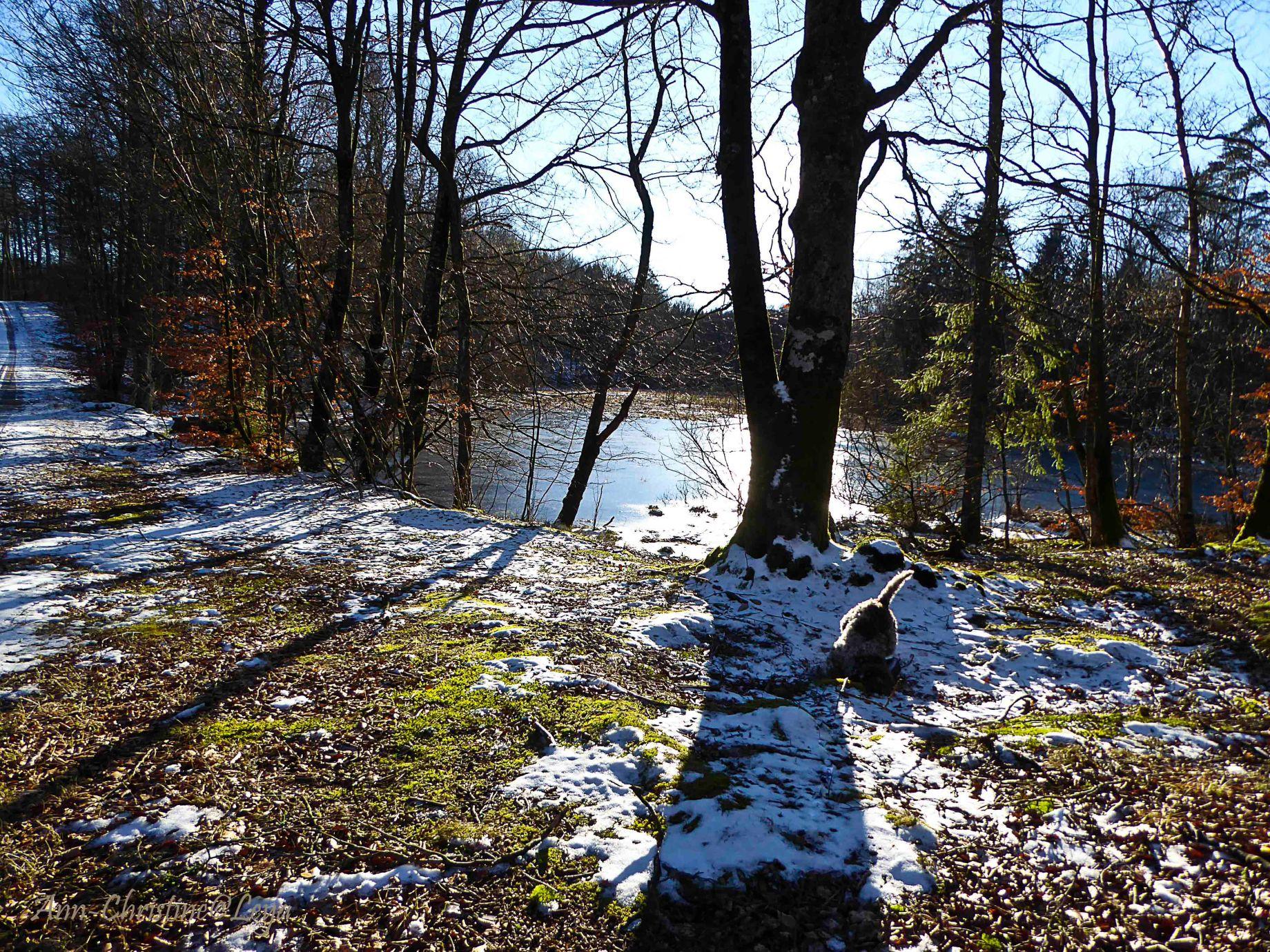 Fototisdag vid Väresjön och Hovdala 200_copy1