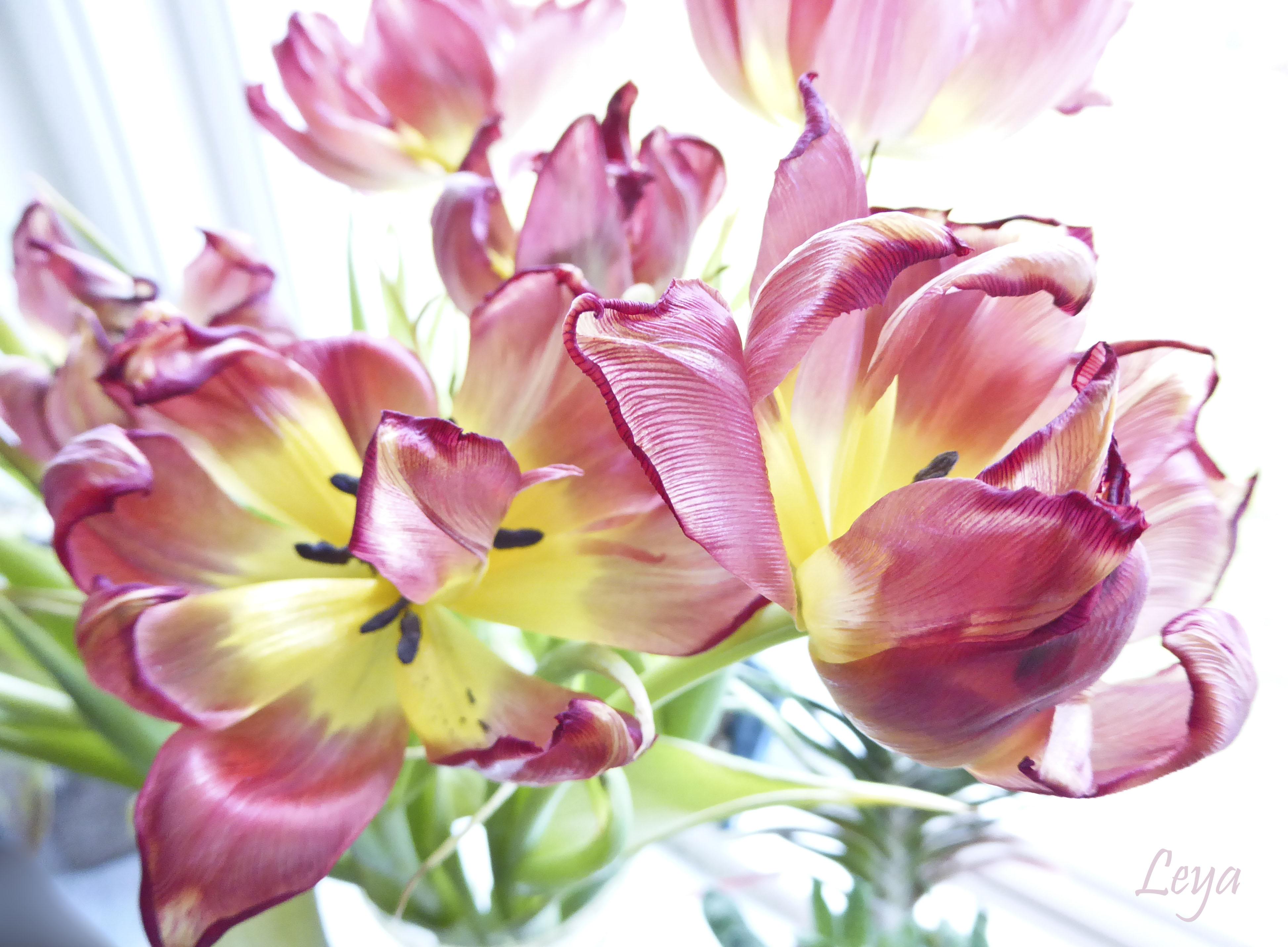Högdagerbilder på husets blomning 131_copy