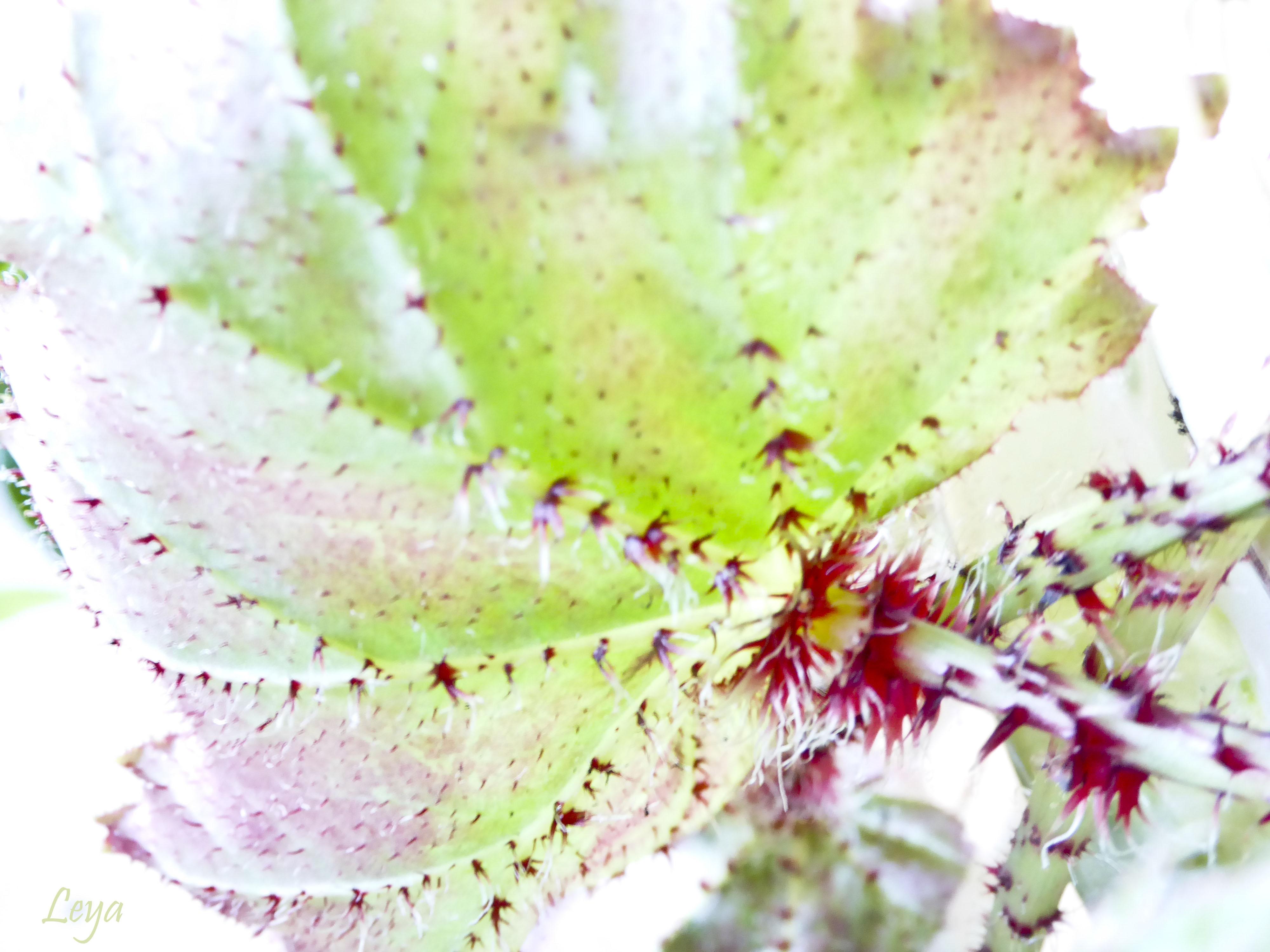 Högdagerbilder på husets blomning 311_copy