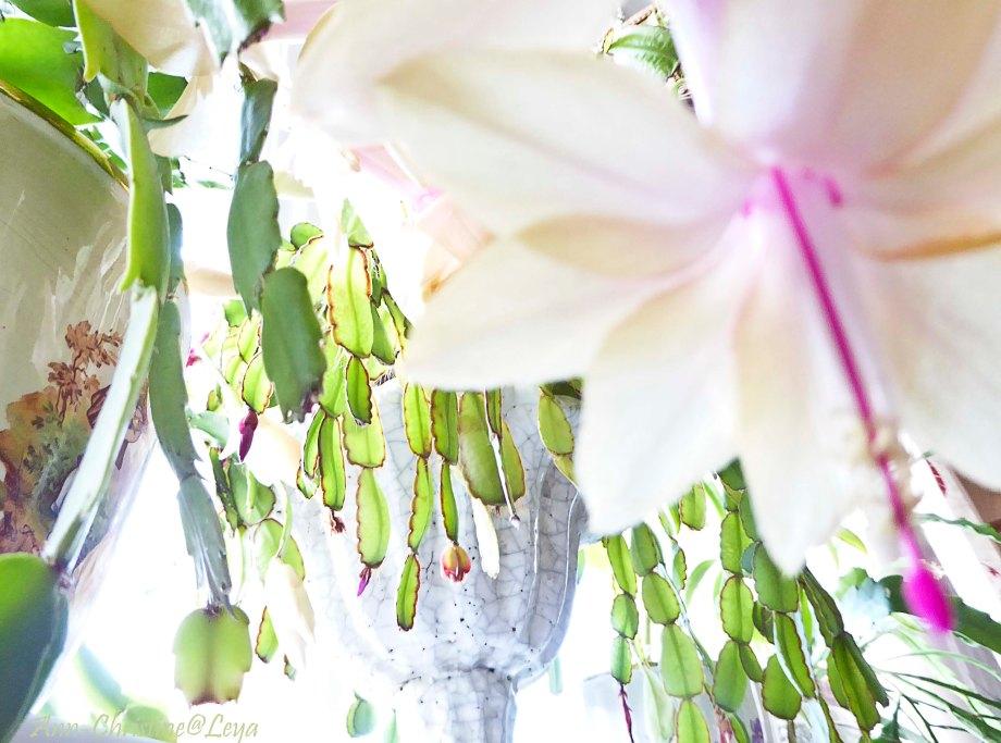 Högdagerbilder på husets blomning 338_copy