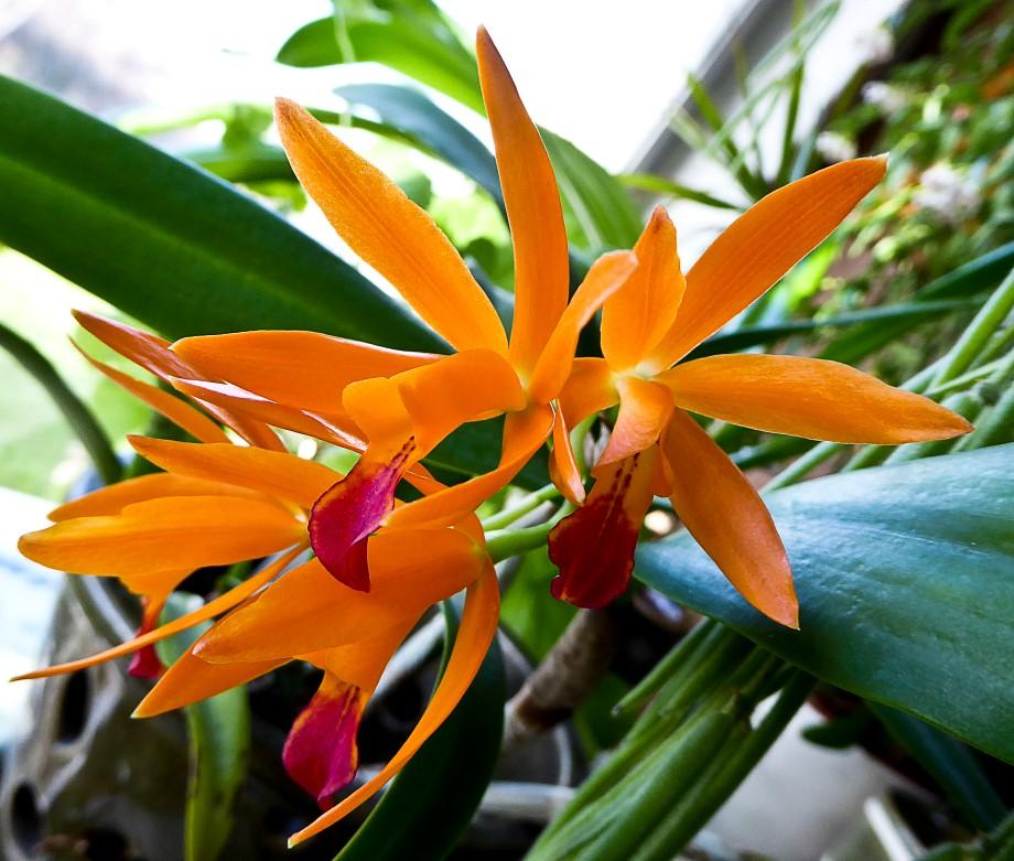 Testbilder och orkideer 030_copy