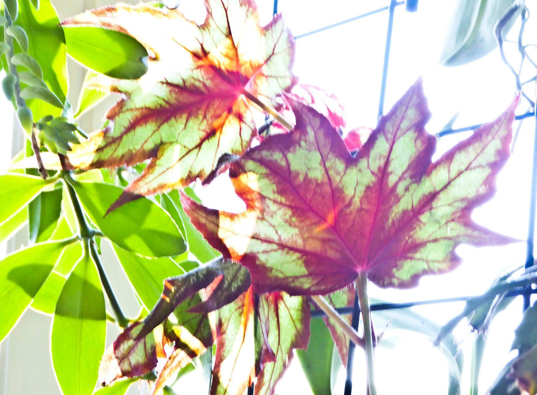 Blommor inomhus 039_copy