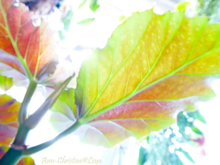 Blommor inomhus 052_copy1