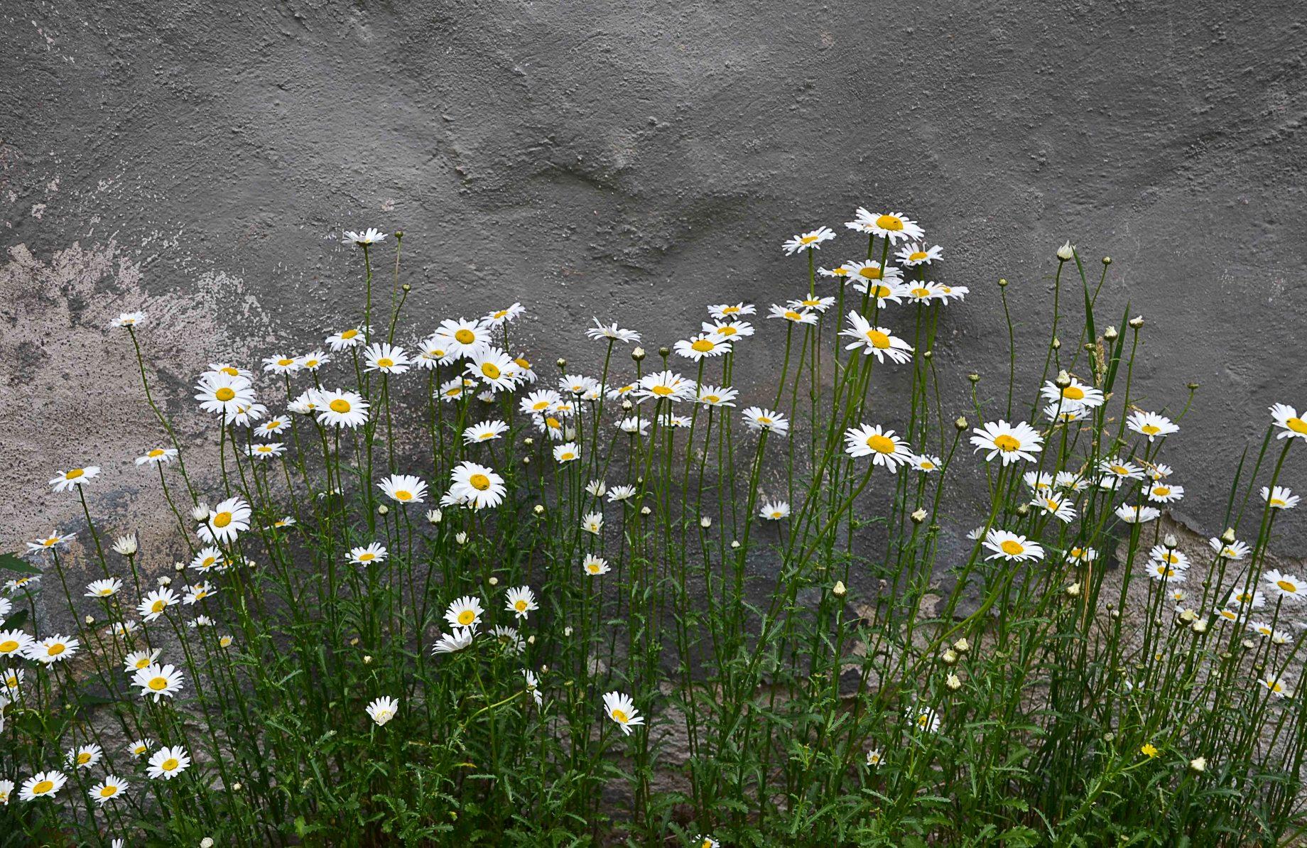 De vilda blommornas dag 011_copy