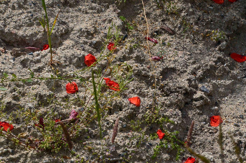 De vilda blommornas dag 122_copy