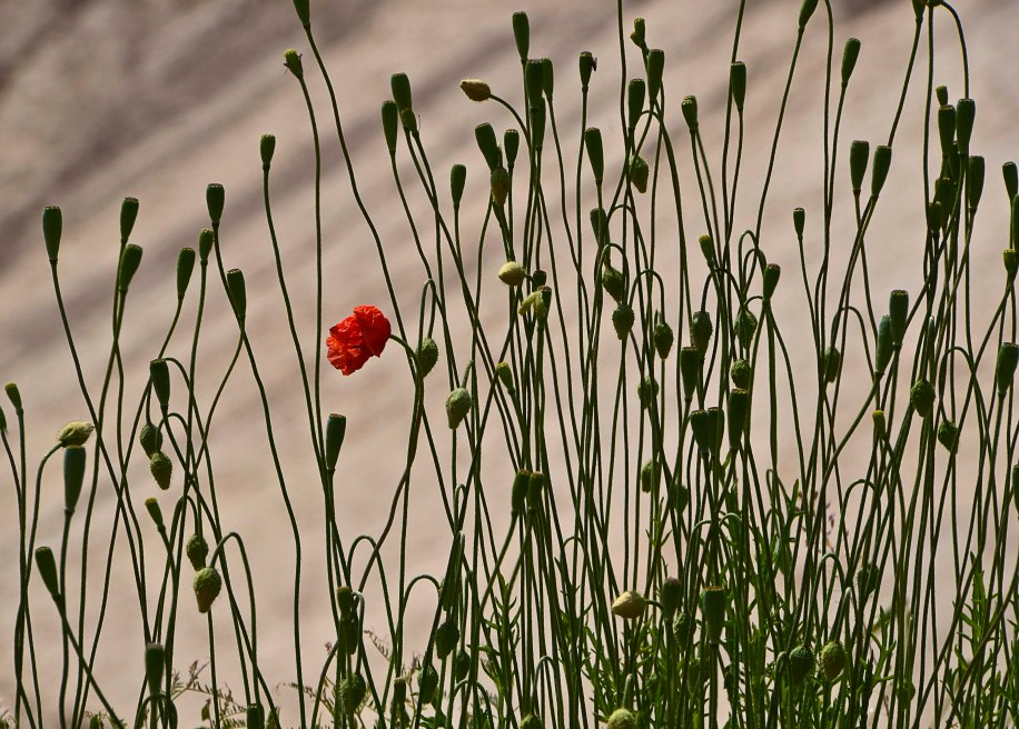 De vilda blommornas dag 130_copy1