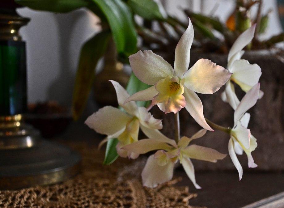 Orkide mm sommar 2016 013_copy