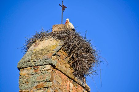 One nest in every village!