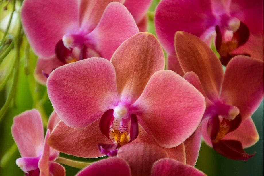 vinter-och-blomning-inomhus-184_copy