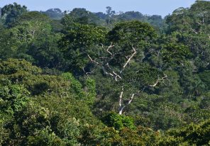 This walk offered splendid views of the canopy and of the birds living here