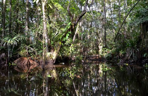 And the beauty of the dense rainforest