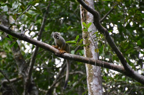 The squirrel monkeys came to bid farewell - how I would miss them!