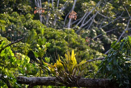 Orchids on the heavy branches