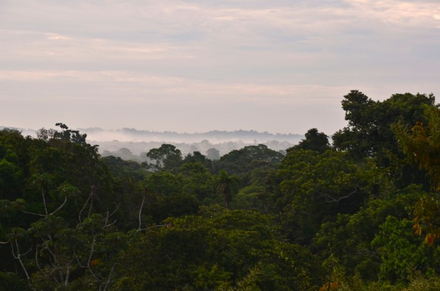 Early up to see the fog lifting from the rainforest
