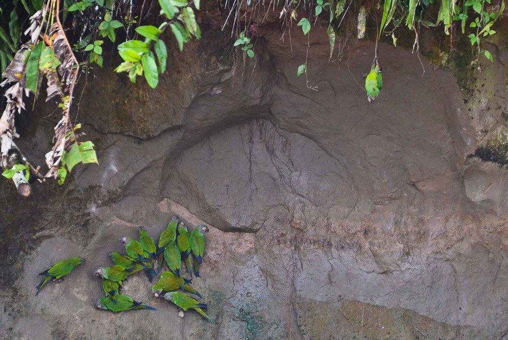 amazonas-och-galapagos-359_copy