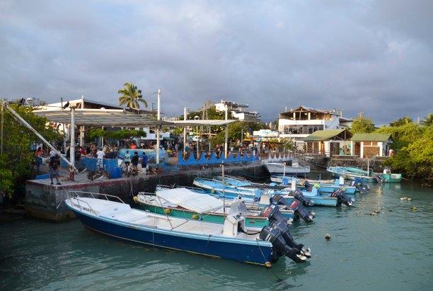 The fish (and bird...)market in Puerto Ayora