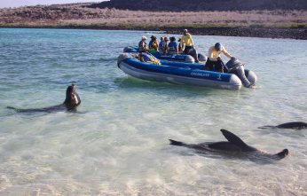 The sealions where always curious when we were snorkeling...