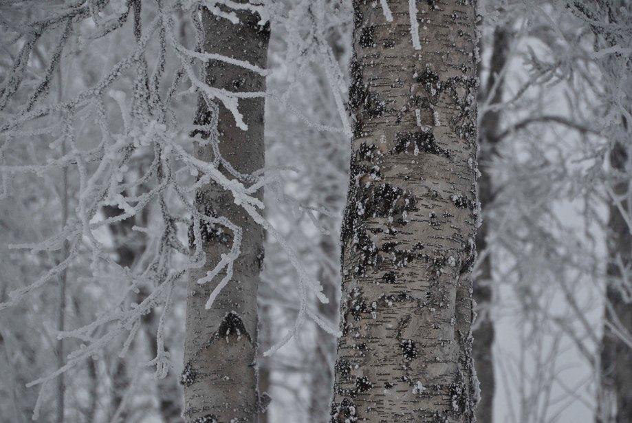norrland-och-vasterbotten-380_copy