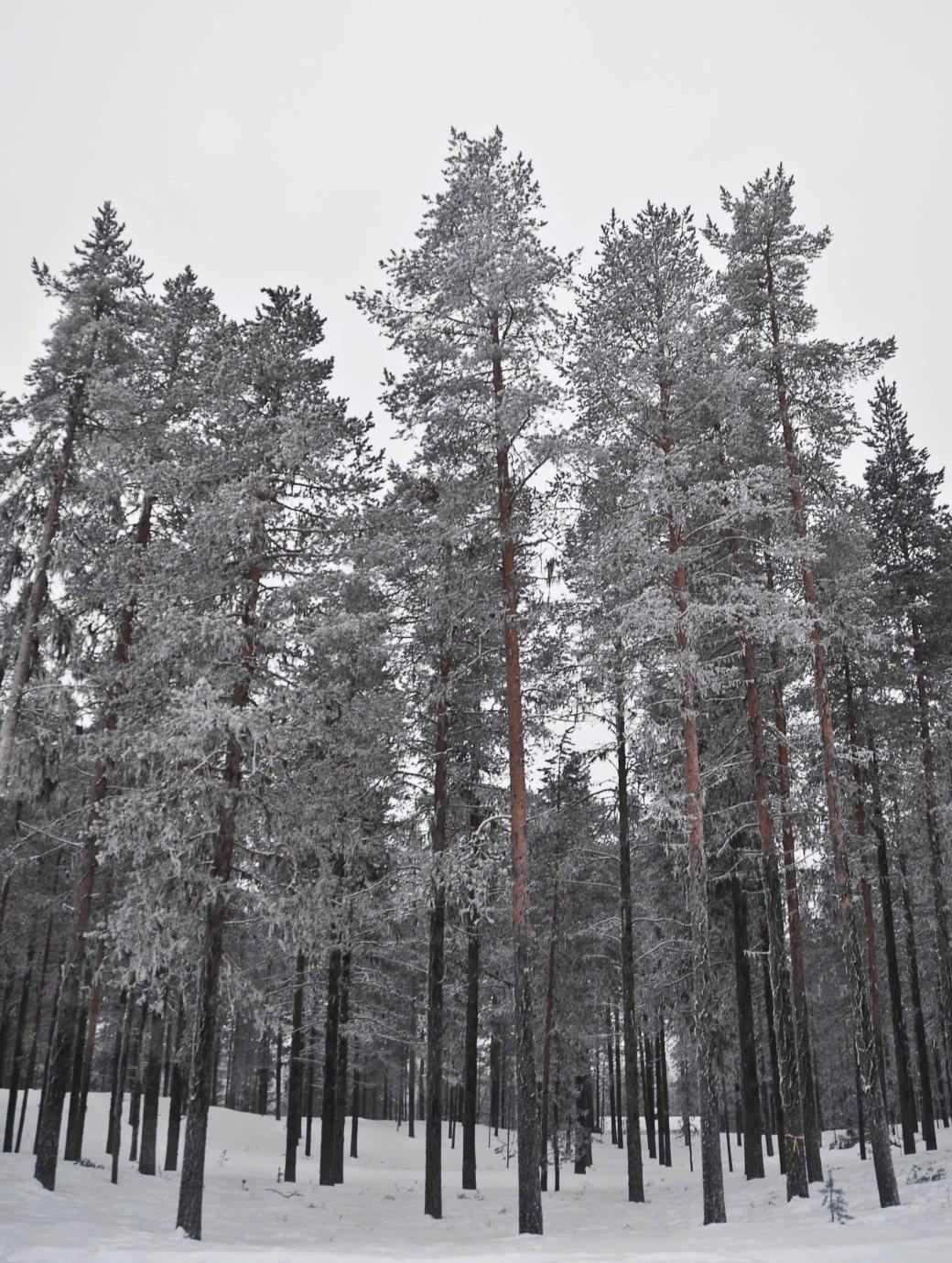 Norrland och Västerbotten 479_copy