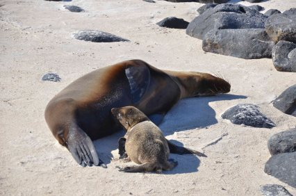 Galapagos 3 and 4 254_copy1