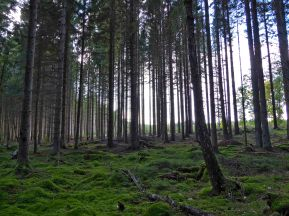 The forest floor is extremely green due to the heavy rainfall this year