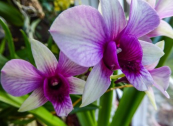 Not much in flower now - but some orchids are...