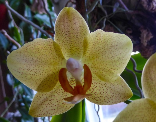 ...different phalaenopsis mostly.