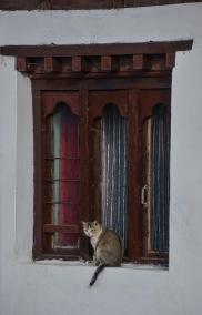 A handsome cat posing