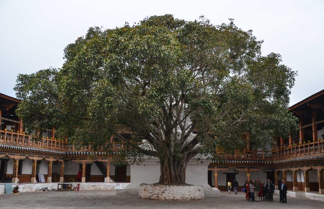 The first court yard with the huge chorten and the old bodhi tree.