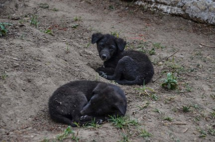...pups lying in the sand under the trees...