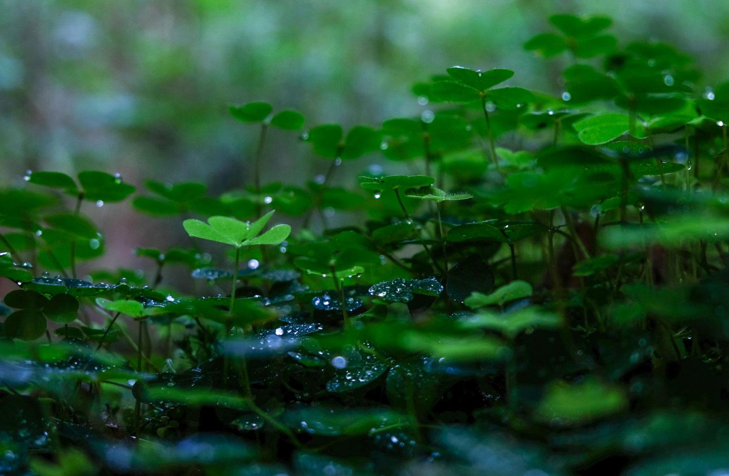 Trädgården Amazonliljan 2018 068-3